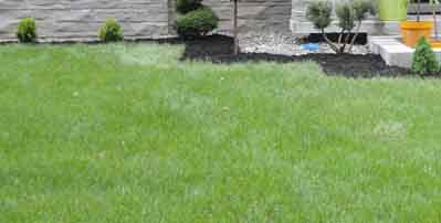 Service entretien arbustes taille de haies qu bec l vis for Service entretien pelouse