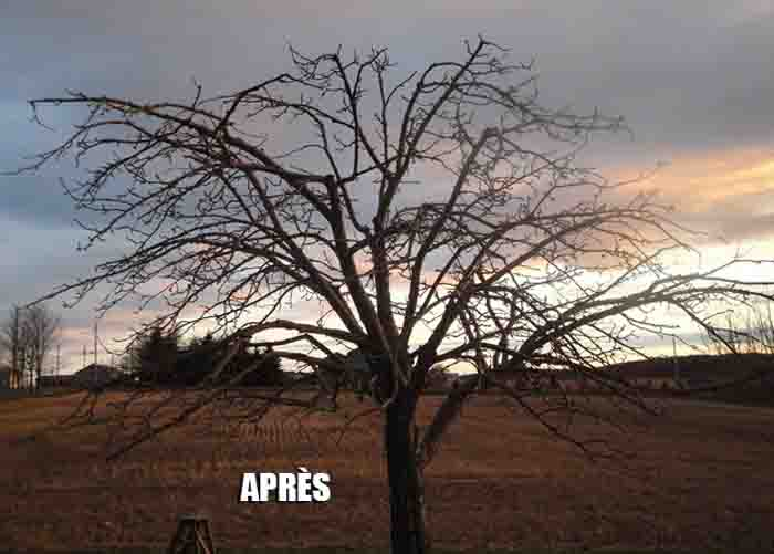 Service entretien hortinature r alisations - Calendrier taille arbres fruitiers ...