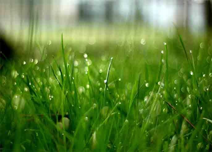 entretien traitement pelouse gazon rive nord qu bec l vis ste foy beauport cap rouge. Black Bedroom Furniture Sets. Home Design Ideas